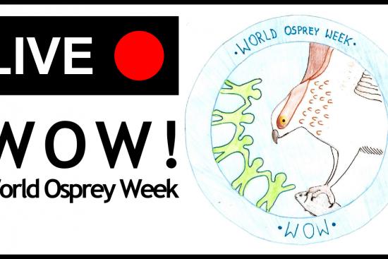 World Osprey Week, ostiralean zuzenean